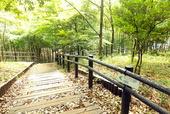 都筑中央公園 竹林