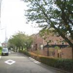 すぐ近くから早渕公園に続く桜並木がはじまる